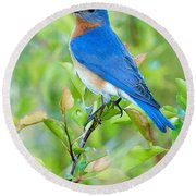 Bluebird Joy Round Beach Towel