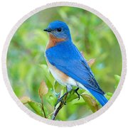 Bluebird Joy Round Beach Towel