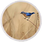 Bluebird Meadow Round Beach Towel