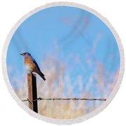 Bluebird On A Post Round Beach Towel by Mike  Dawson