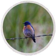 Bluebird On A Wire Round Beach Towel by Mike  Dawson