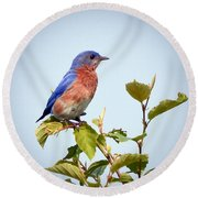 Round Beach Towel featuring the photograph Bluebird On Top by Kerri Farley