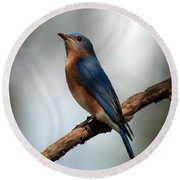 Bluebird -why Yes Round Beach Towel