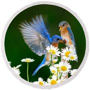Bluebirds And Daisies Round Beach Towel