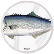 Bluefish Round Beach Towel by Charles Harden