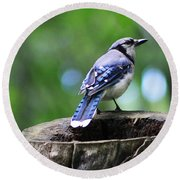 Round Beach Towel featuring the photograph Bluejay by Alyce Taylor