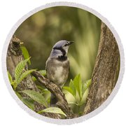 Bluejay In Fork Of Tree Round Beach Towel by Anne Rodkin