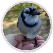Round Beach Towel featuring the photograph Bluejay by Mim White