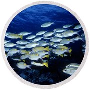 Bluelined Snappers And Yellowspot Emperors Round Beach Towel