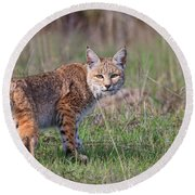 Bobcat Glance Round Beach Towel