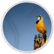 Bokmakierie Bird Calling Round Beach Towel