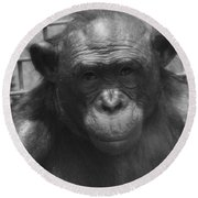 Bonobo Round Beach Towel by Dan Sproul