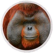 Bornean Orangutan Round Beach Towel by Lourry Legarde