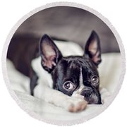 Boston Terrier Puppy Round Beach Towel