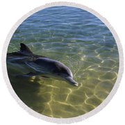 Bottle-nosed Dolphin Tursiops Truncatus Round Beach Towel