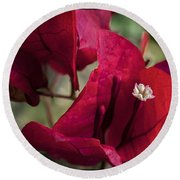 Round Beach Towel featuring the photograph Bougainvillea by Steven Sparks