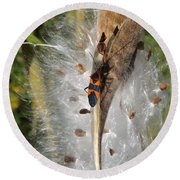 Boxelder On Butterfly Milkweed 2 Round Beach Towel