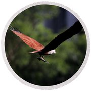 Brahminy Kite With Catch  Round Beach Towel