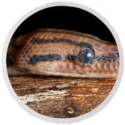 Round Beach Towel featuring the photograph Brazilian Rainbow Boa Epicrates Cenchria by David Kenny