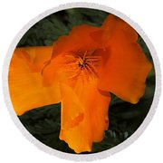 Bright California Poppy Round Beach Towel