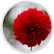 Bright Red Dahlia Round Beach Towel