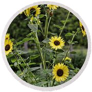 Bright Sunflowers Round Beach Towel