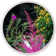 Brilliant Astilbe In Markree Castle Gardens Round Beach Towel