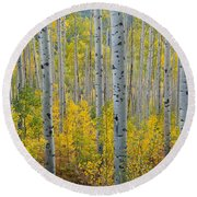 Brilliant Colors Of The Autumn Aspen Forest Round Beach Towel