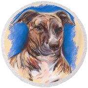 Brindle Pit Bull Portrait Round Beach Towel