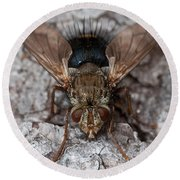 Round Beach Towel featuring the photograph Bristle Fly by WB Johnston