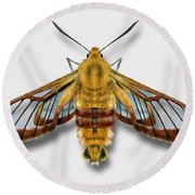 Broad-bordered Bee Hawk Moth Butterfly - Hemaris Fuciformis Naturalistic Painting -nettersheim Eifel Round Beach Towel