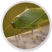 Broad-winged Katydid Round Beach Towel