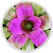Round Beach Towel featuring the photograph Bromeliad by Allen Beatty