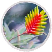 Bromeliad Beauty Round Beach Towel