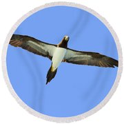 Brown Booby Round Beach Towel by Tony Beck