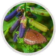 Brown Butterfly In The Green Jungle Round Beach Towel