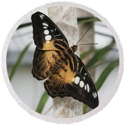 Brown Clipper Butterfly #2 Round Beach Towel by Judy Whitton