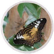 Round Beach Towel featuring the photograph Brown Clipper Butterfly #5 by Judy Whitton