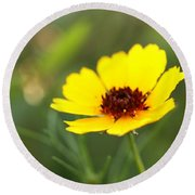 Brown Eyed Susan Round Beach Towel