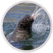 Brown Fur Seal Throwing A Fish Head Round Beach Towel