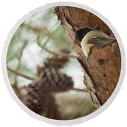 Brown Headed Nuthatch Round Beach Towel by Linda Unger