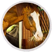 Round Beach Towel featuring the photograph Brown Horse by Joann Copeland-Paul