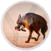 Brown Hyena With Bat-eared Fox In Jaws Round Beach Towel