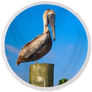 Brown Pelican - Pelecanus Occidentalis Round Beach Towel by Carsten Reisinger