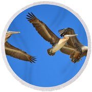 Round Beach Towel featuring the photograph Brown Pelicans In Flight by Debra Martz