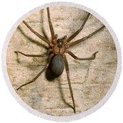 Brown Recluse Spider Round Beach Towel
