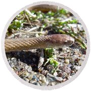 Brown Snake Round Beach Towel by Kent Lorentzen
