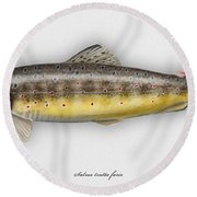 Brown Trout - Salmo Trutta Morpha Fario - Salmo Trutta Fario - Game Fish - Flyfishing Round Beach Towel