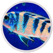 Bubbles - Fish Art By Sharon Cummings Round Beach Towel