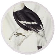 Great Hornbill Round Beach Towel by John Gould